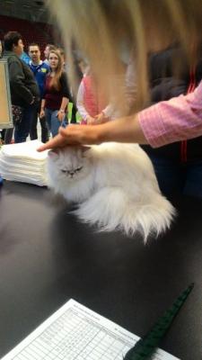 Mezinárodní výstava koček_10