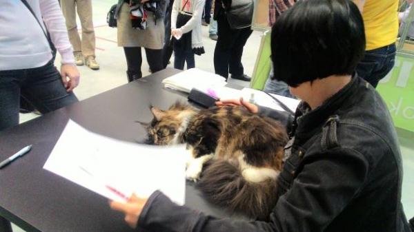 Mezinárodní výstava koček_8