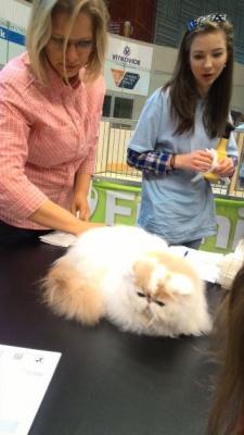 Mezinárodní výstava koček_9